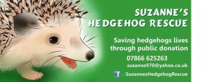 Suzanne's Hedgehog Rescue Christmas Event