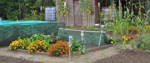 Image: Wisbech allotments